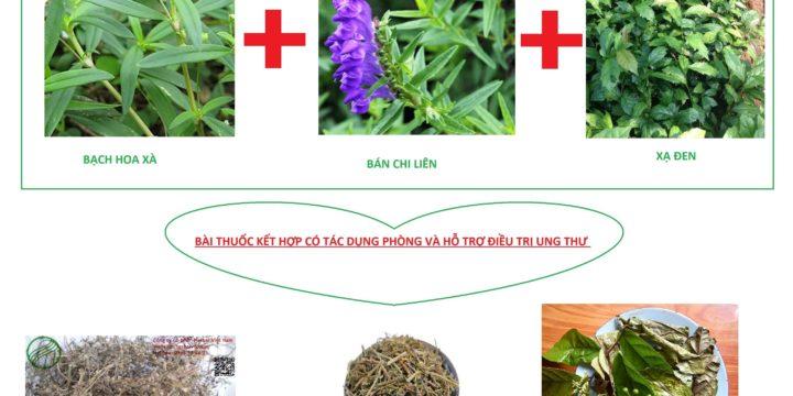 Thảo dược xạ đen bán chi liên bạch hoa xà thiệt thảo – phòng và hỗ trợ điều trị ung thư